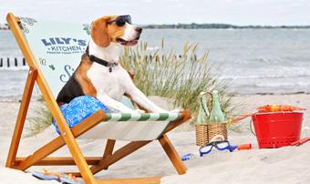 Doggy beach bar due weekend in spiaggia dedicati ai - Bagno cayo loco lido di classe ...