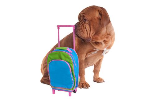 Per Fido è difficile andare in vacanza: animali ammessi solo nel 9% delle strutture per le vacanze.