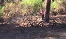 Incendio a Fiumicino: quel che resta della pineta - La Repubblica